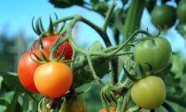 Các loại rau củ chỉ hợp ăn sống hoặc ăn chín