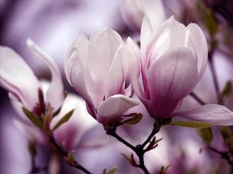 Ngắm Diễm My 9X quyến rũ tuyệt trần với hoa mộc lan