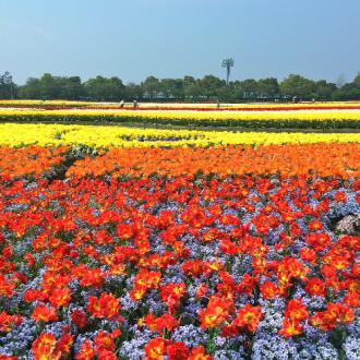 Những điểm đến thú vị tại Nhật Bản dịp hè