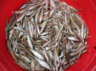 Tuyệt ngon món cá còm kho nghệ Sông Lam